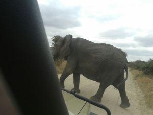 Elephant Ta (6)