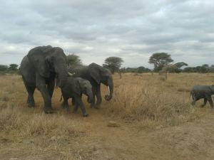 Elephant Ta (8)