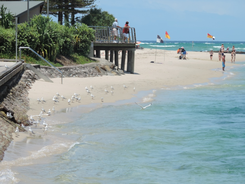 Patrolled beaches are enjoyed by the seagulls as much as people.