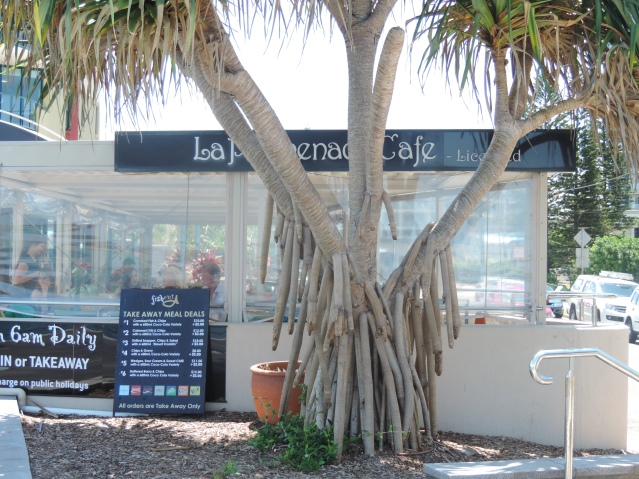 La Promenade Cafe sign dominated by a beautiful pandanus palm.