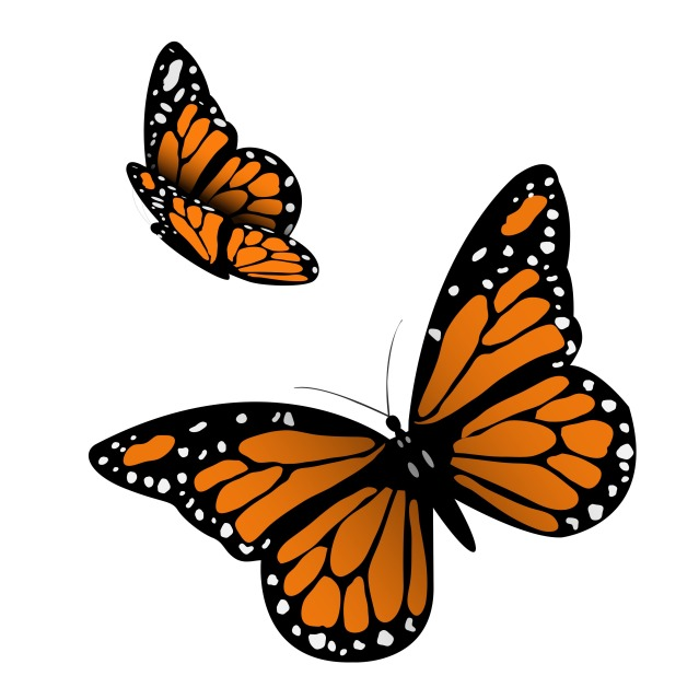 Similar to my backyard butterfly. How beautiful! (Graphic Stock)