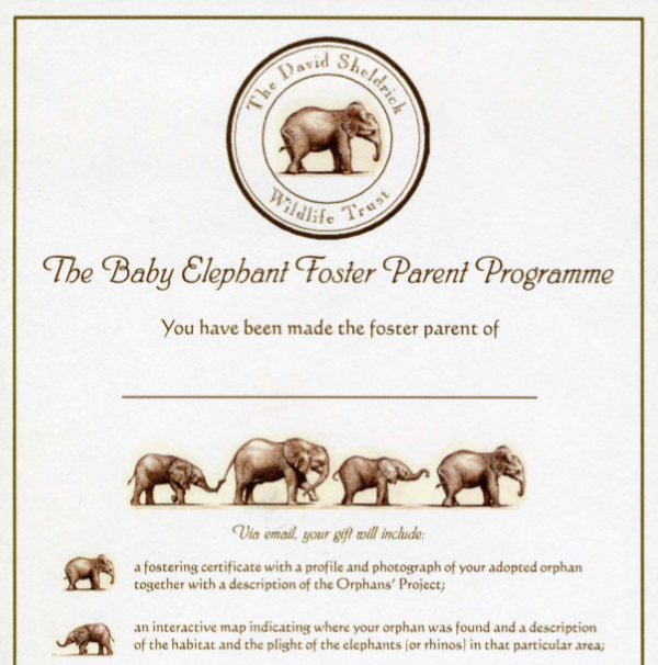 Foster parent program the david sheldrick wildlife trust. Elephant.